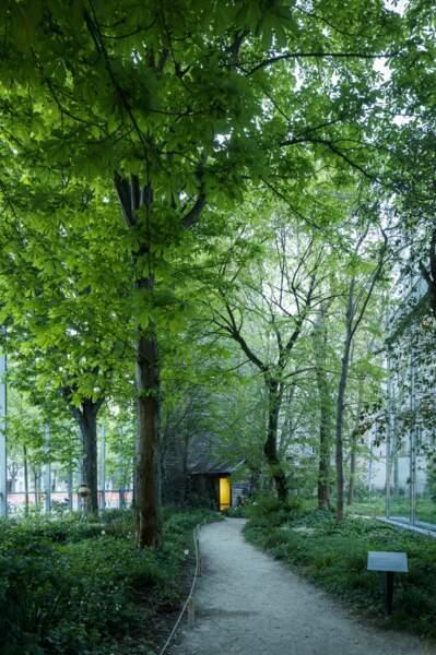 Vue du jardin de la Fondation Cartier pour l'art contemporain, 2019