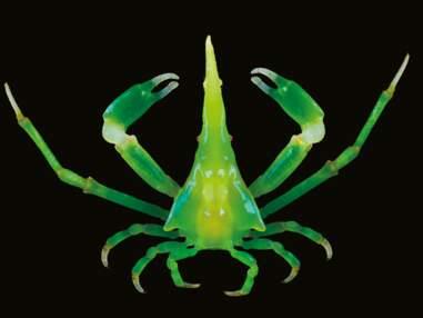 Exposition Océan : d'incroyables images de ces créatures cachées sous la surface