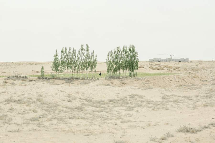 Des arbres brise-vent