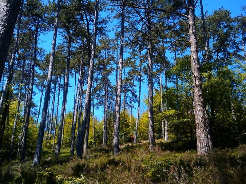Parcourir la forêt de Fontainebleau