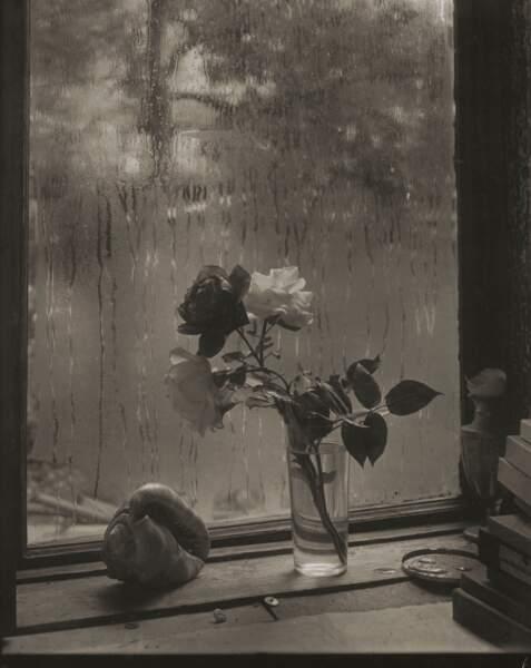 La dernière rose, 1956