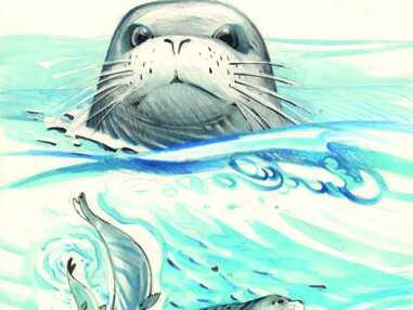 Le phoque moine, un animal méconnu des eaux méditeranéennes