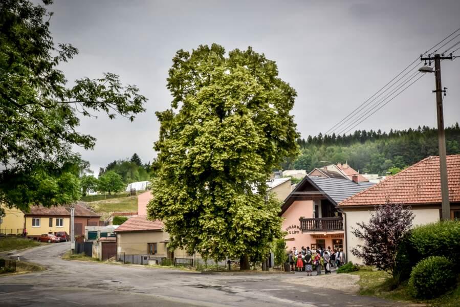République tchèque : le tilleul de la liberté de Zádvoří