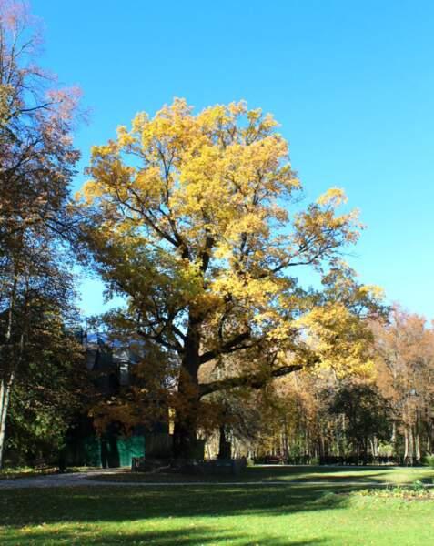 2/ Russie : le chêne d'Abramtsevo, coqueluche des artistes