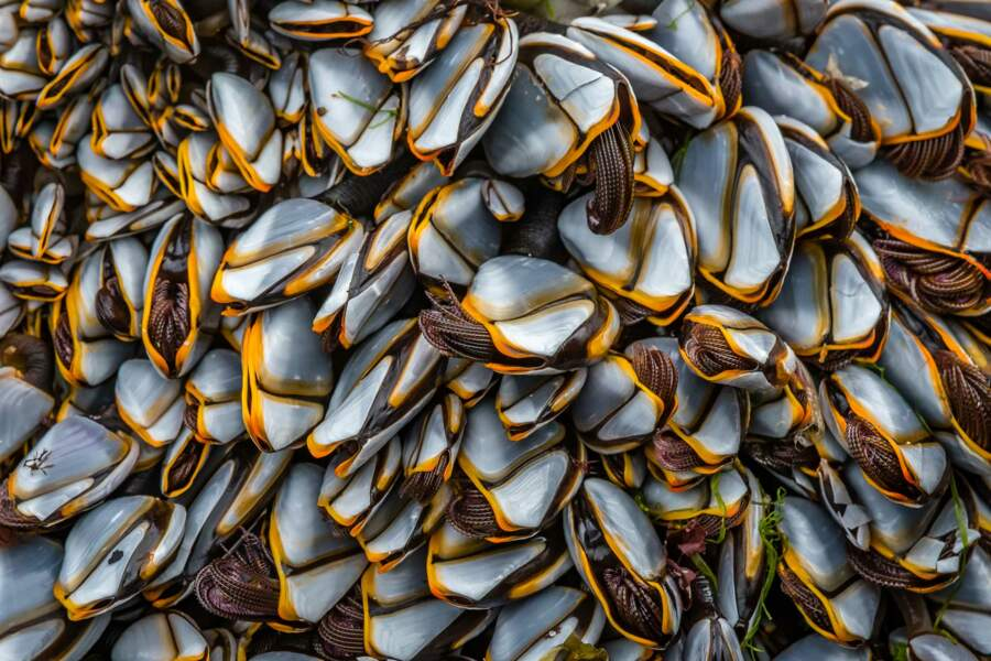Dans l'intimité de crustacés