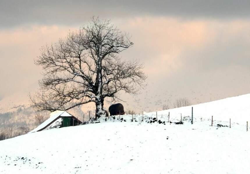 Photo prise au Plateau du Bénou (Pyrénées-Occidentales), par heugene