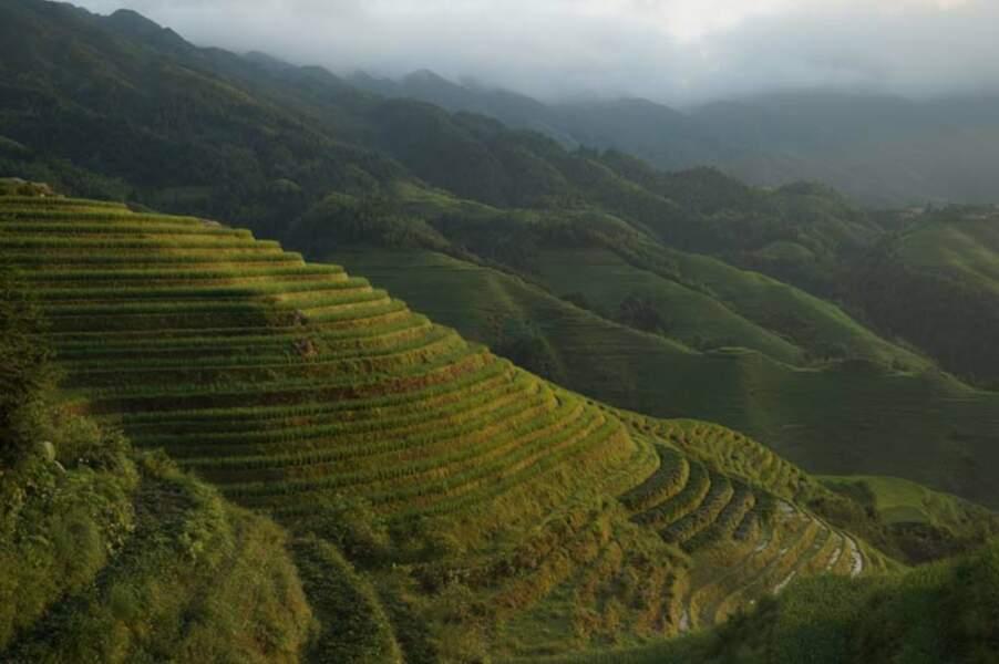 Chine - Les terrasses du Dos de Dragon