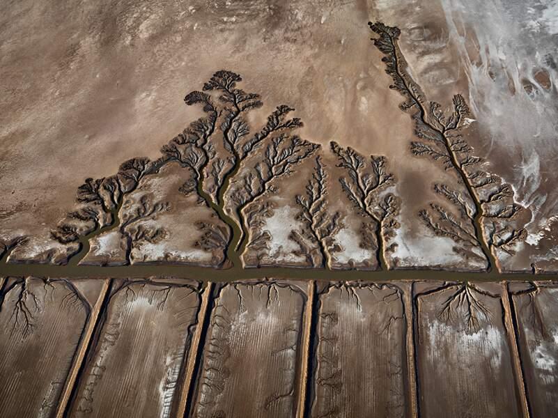 Colorado River Delta #10, Abandoned Shrimp Farms, Sonora, Mexico, 2012