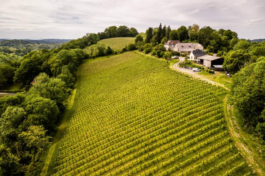 Jurançon, vignes d'Irène Guilhendou du domaine Latapy, à Gan (Pyrénées-Atlantiques)