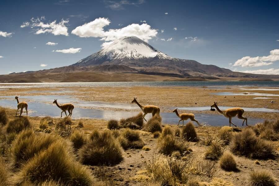 n°20 - Le Chili