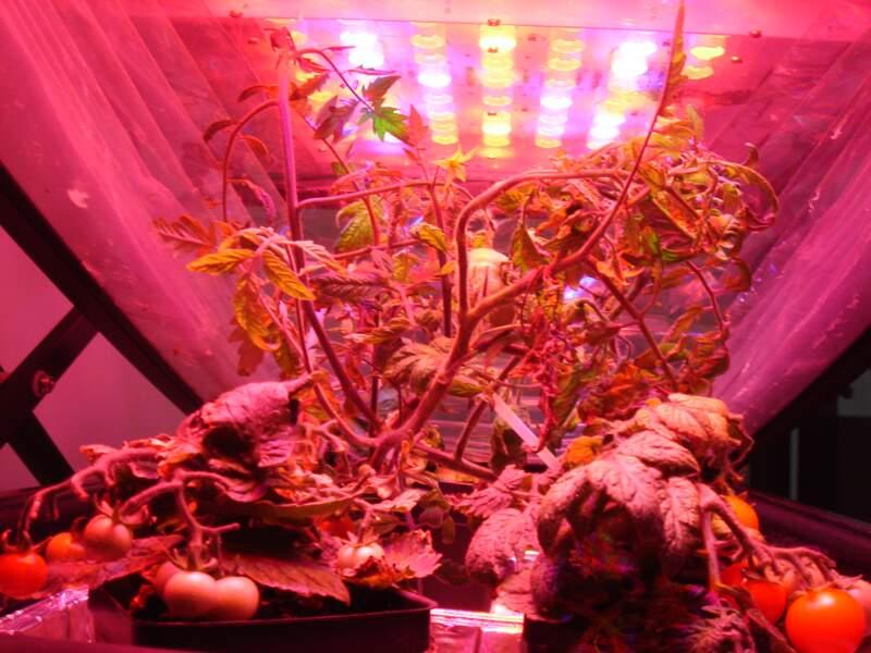 Les membres de l'équipage mènent des expériences sur les plantes