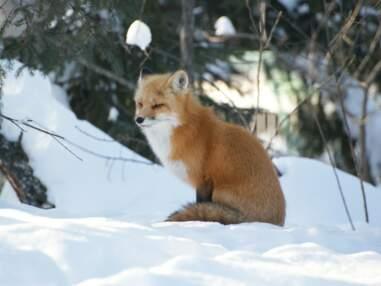 Des animaux parés pour l'hiver