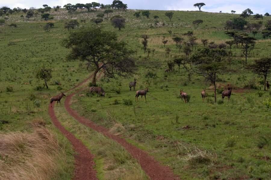 Un safari dans le parc de l'Akagera