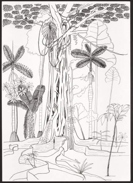 Francis Hallé, Ficus étrangleur, forêt de Pakitza, Amazonie péruvienne, non daté