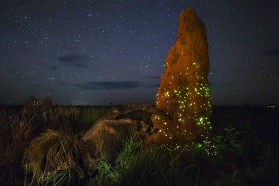 """Commando de nuit / Marcio Cabral (Brésil), vainqueur """"animaux dans leur milieu naturel"""""""