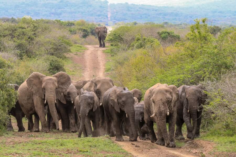 L'hommage des éléphants