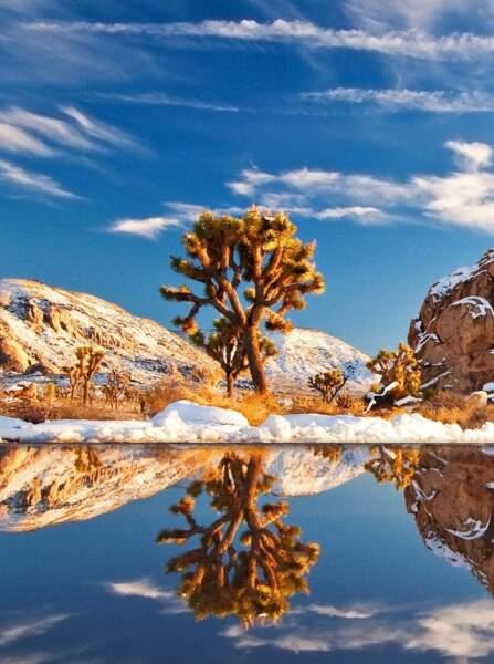 Joshua tree National Park, dans le sud de la Californie