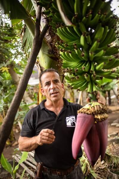 Le showman de la banane