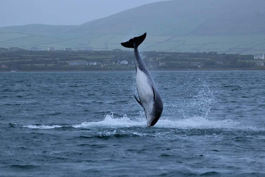 Partir à la rencontre des dauphins