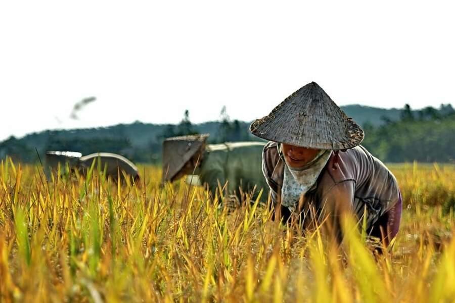Photo prise au Vietnam par tretoon