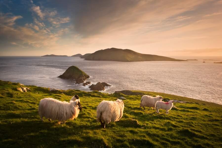n°15 - L'Irlande