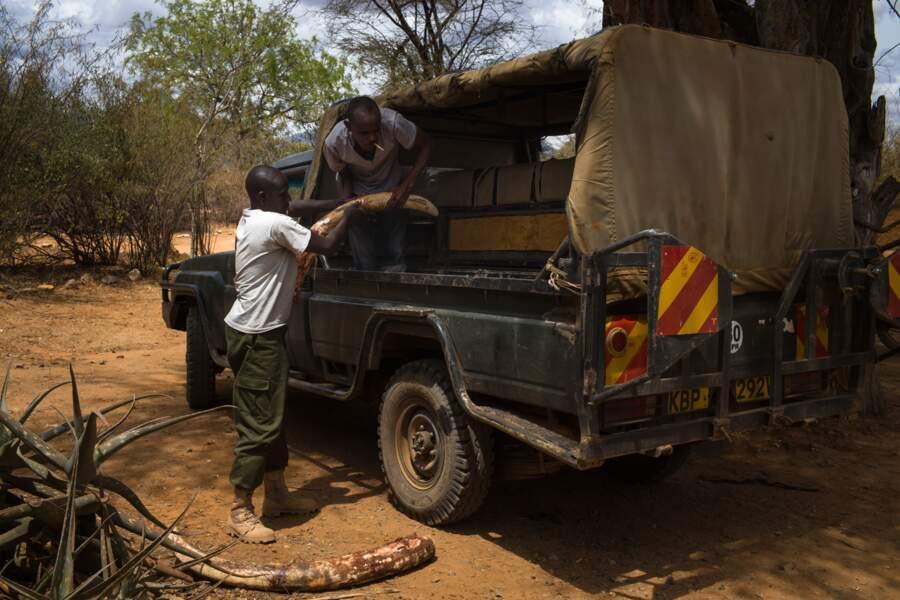 Interdiction de détenir de l'ivoire