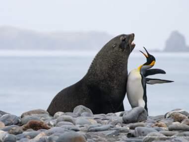 Les drôles de photos finalistes du Comedy Wildlife Photography Awards