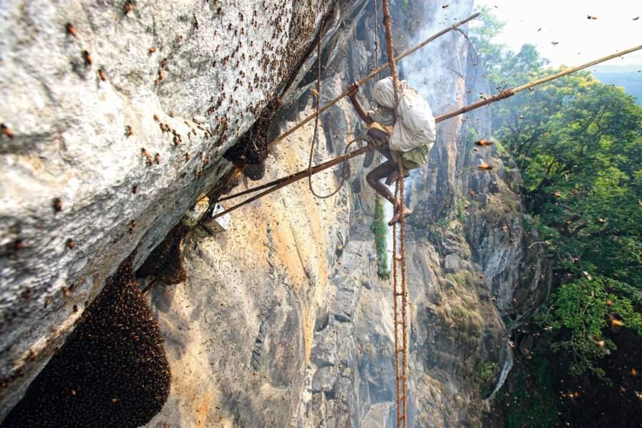 Inde, Etat du Tamil Nadu, biosphère des Nilgiris