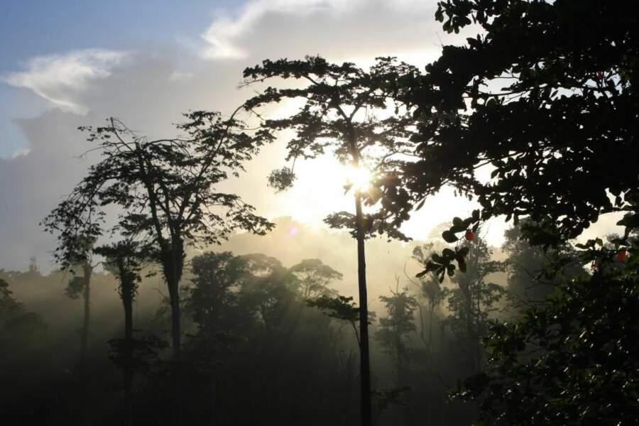 Brume sur la forêt équatoriale