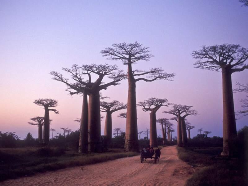 Diaporama n°9 : A travers les terres malgaches