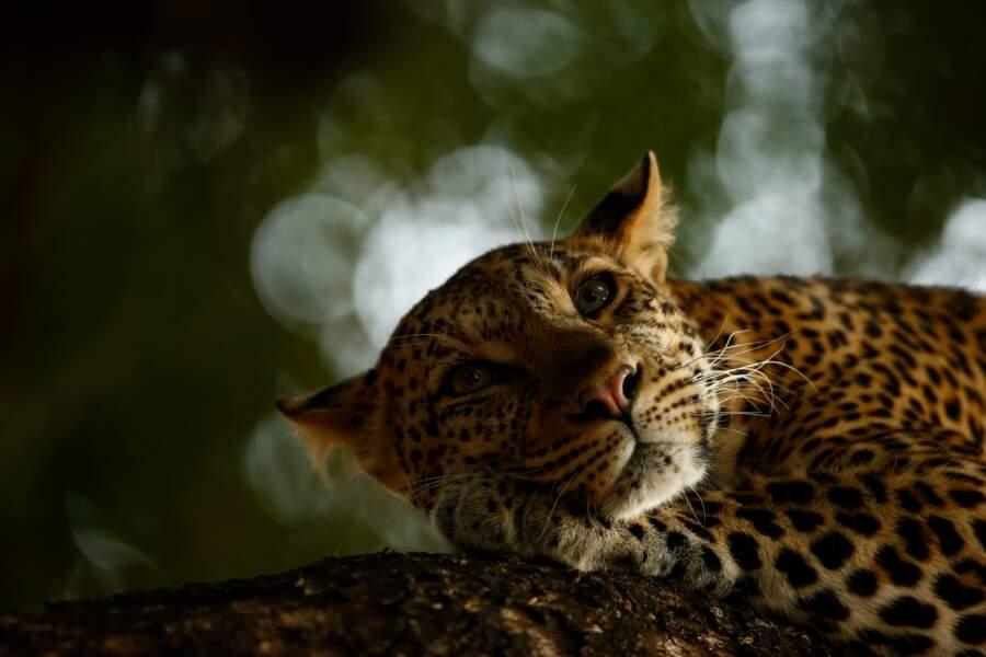 Portrait au réveil - Skye Meaker (Afrique du Sud), vainqueur dans la catégorie «jeune photographe animalier»