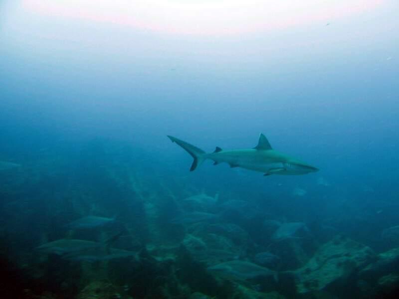 S'adonner à la plongée sous-marine