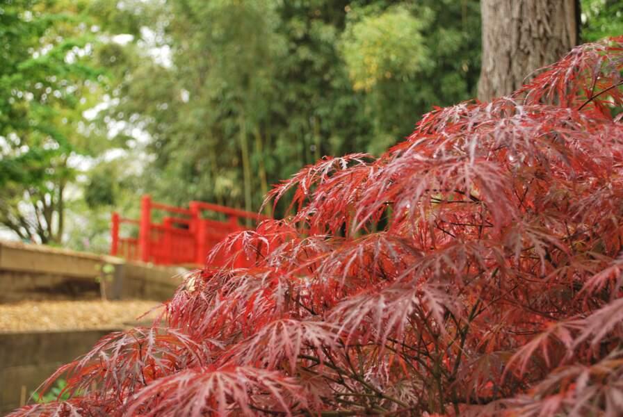 Se détendre au jardin botanique