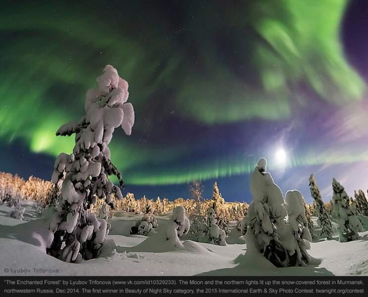 """La """"forêt enchantée"""", en Russie"""