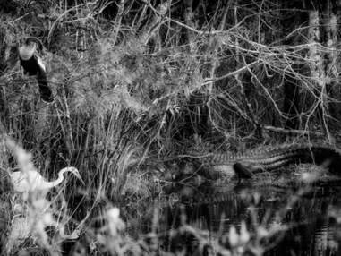 Dans le dédale des Everglades en Floride