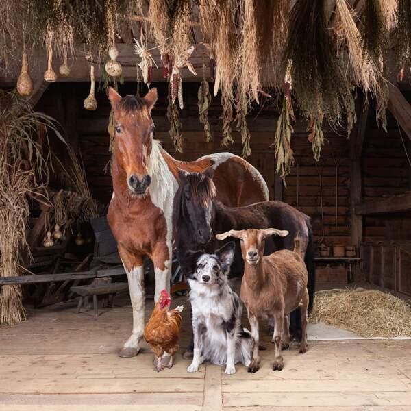 Le grand show des animaux de la ferme