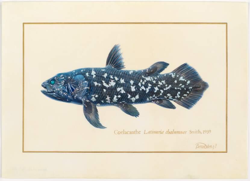 """Le coelacanthe, ce """"fossile vivant"""""""
