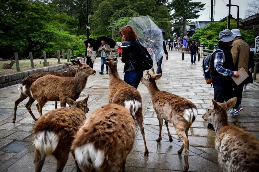 Nara, promenade parmi les cerfs et les dieux