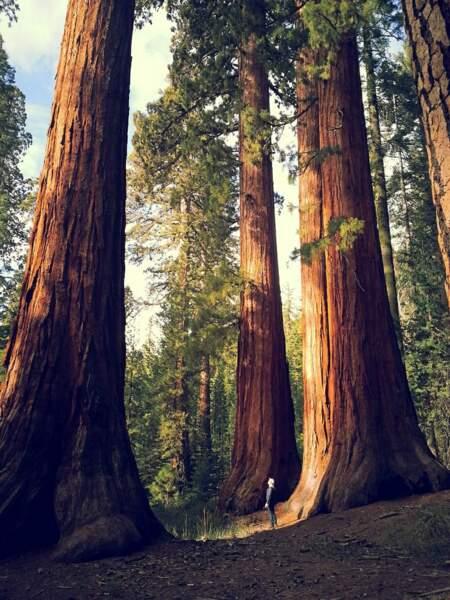 Sequoia National Park, dans l'est de la Californie