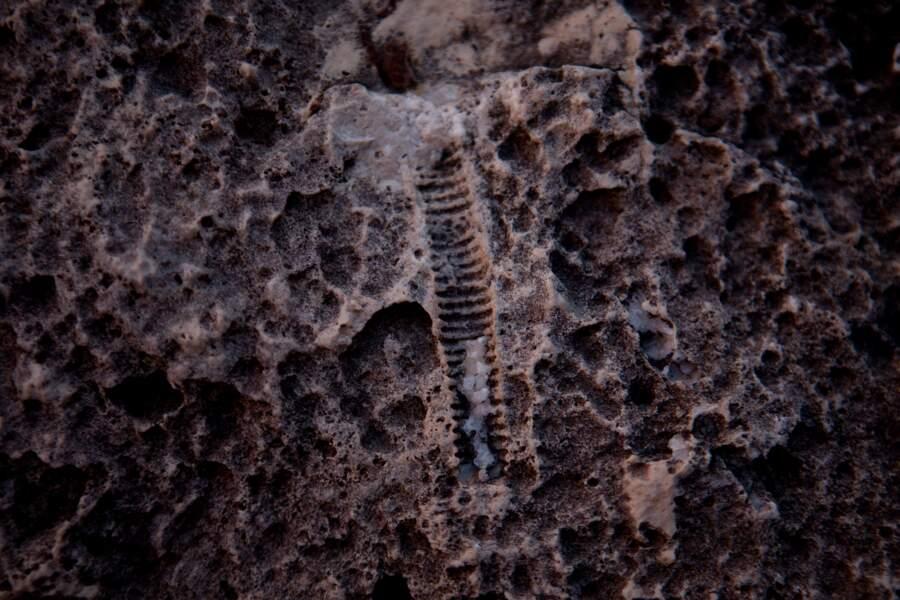 8 - Le Grand Canyon abrite de nombreux fossiles mais pas de dinosaures