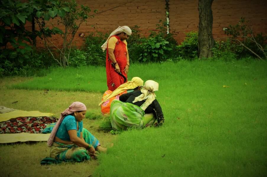 Femmes dans un champ de riz