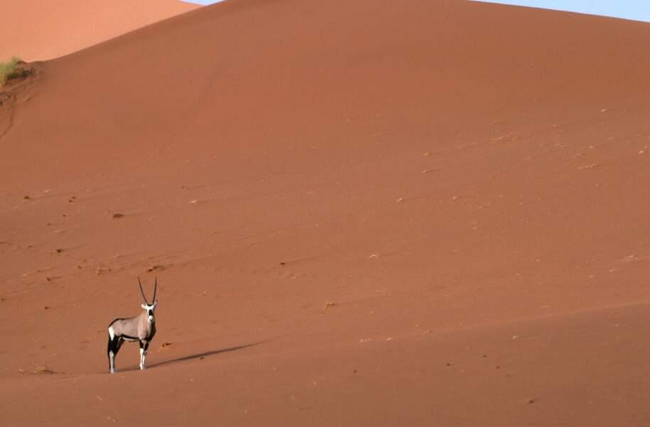 Un désert qui trompe énormément