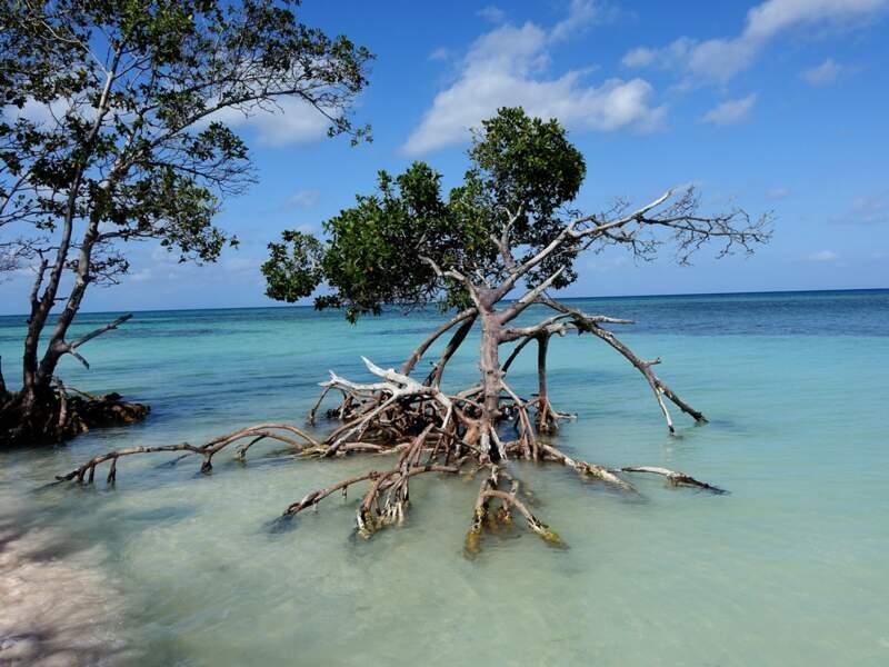 Cayo Jutias, petite île de sable blanc à l'ouest de Cuba, entourée d'une eau limpide