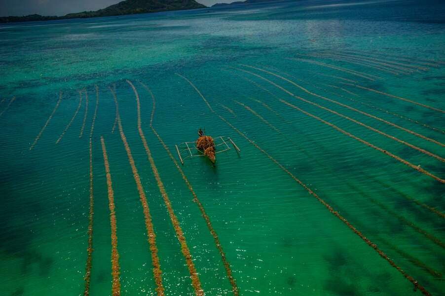 De graciles pirogues, les bancas, sillonnent des flots striés de champs d'algues