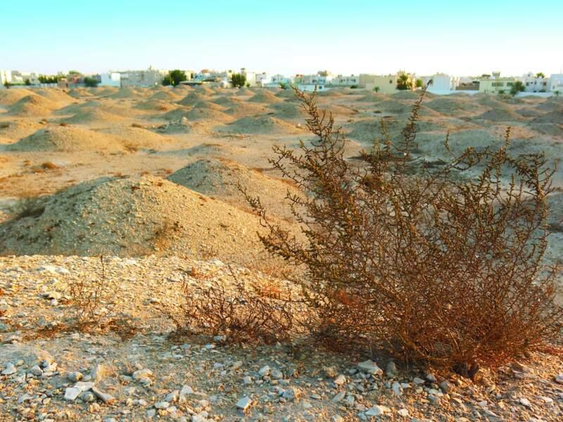 Les tombes de la culture Dilmun, au Bahreïn