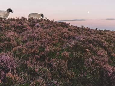 En Angleterre, dans les pas de Jane Austen
