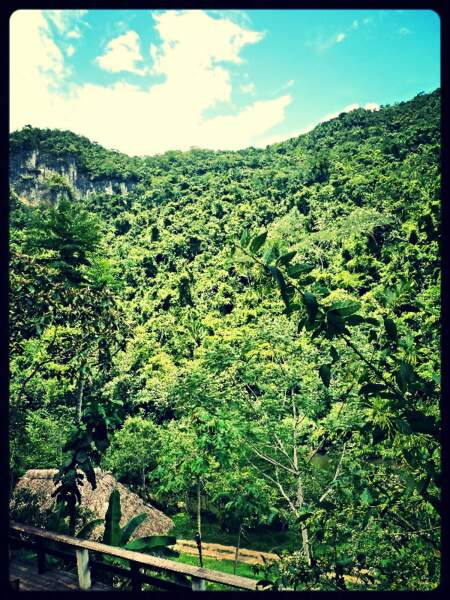 Dans la jungle, au Belize