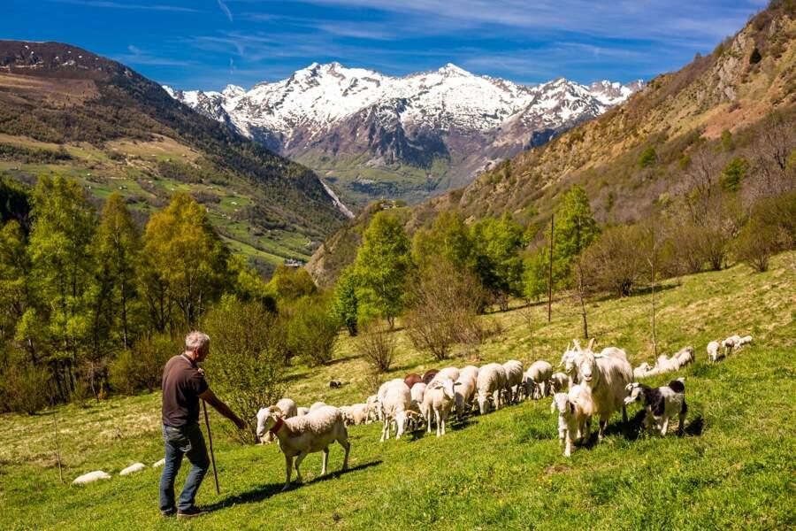 Patrick Theil, éleveur à Sers (Hautes-Pyrénées)