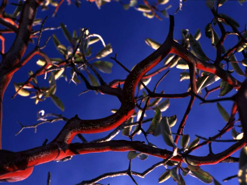 Diaporama n°11 : Sierra Tarahumara, le Far West mexicain