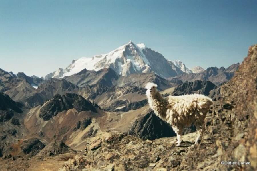 Bolivie - La Cordillère royale, un joyau d'altitude !